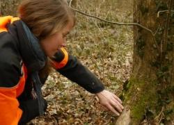 Baumkontrolle in einem Waldkindergarten in Freiburg