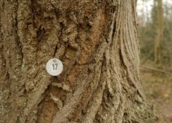 Nummerierter Baum aus einem Baumkataster in Freiburg