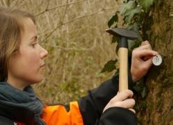 Erstaufnahme bei der Baumkontrolle: Anbringen der Nummerierung für ein Baumkataster