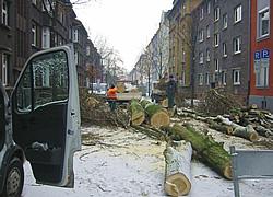 Baumfällung in Freiburg und Umgebung