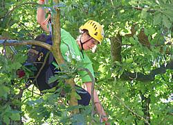 Baumpflege in Freiburg und Umgebung
